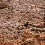 Allarme Fao: crisi alimentare si aggrava dalla Nigeria al Ciad