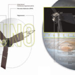 Juno è in orbita intorno a Giove