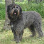 Il cane di Fonni: nel suo genoma la storia della Sardegna