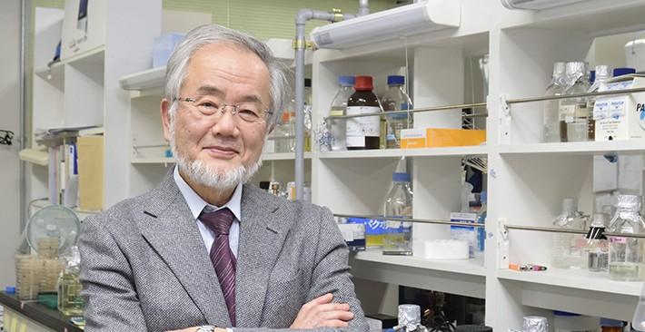 Il Nobel per la Medicina allo scopritore dei meccanismi di riciclo della cellula