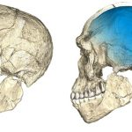 I primi Sapiens vivevano in Marocco 300mila anni fa