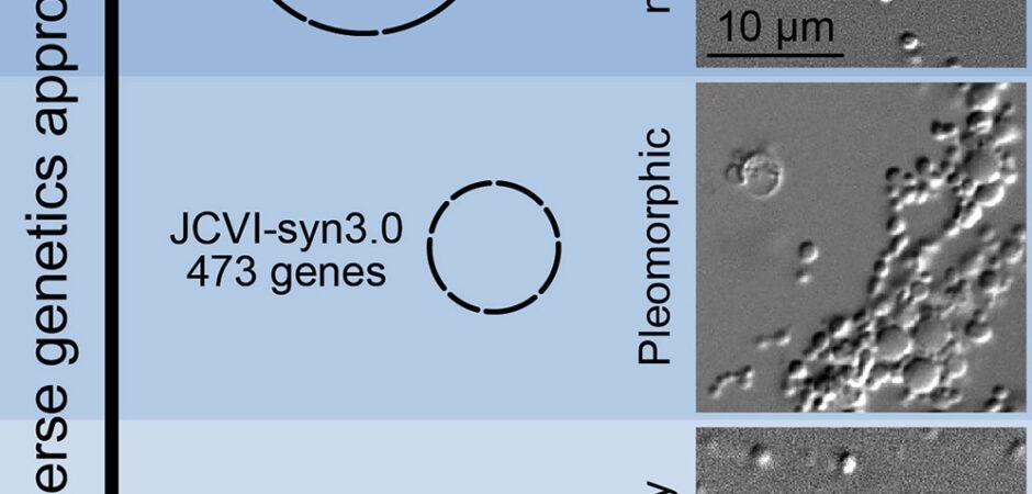 Craig Venter ora crea cellule sintetiche che crescono e si dividono normalmente